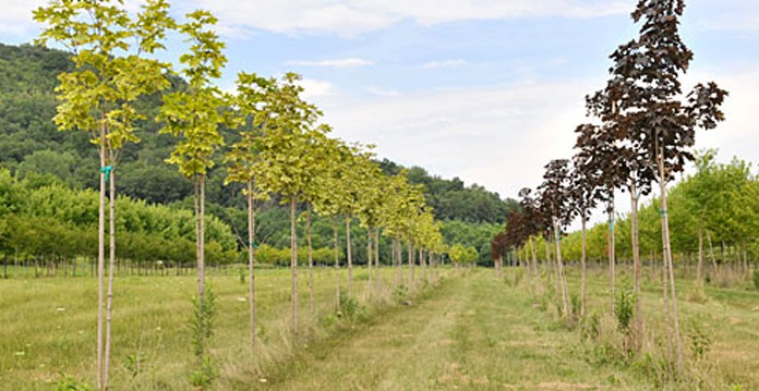 Tree Farm, Local Tree Farms, Tree Farm Nursery, Tree Saplings